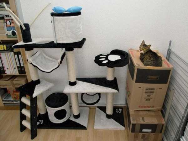 funny-cat-logic (3)