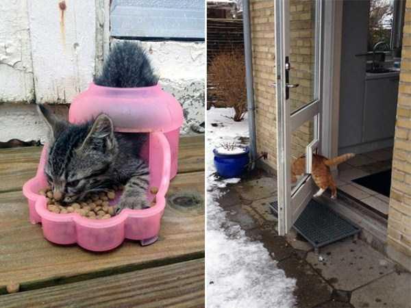 funny-cat-logic (4)