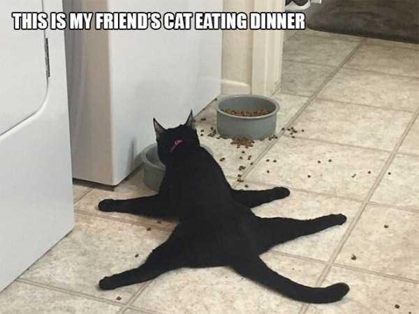 funny-cat-logic (5)