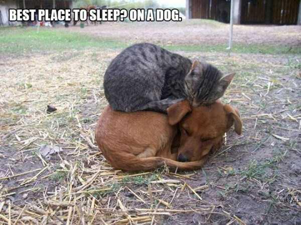 funny-cat-logic (6)