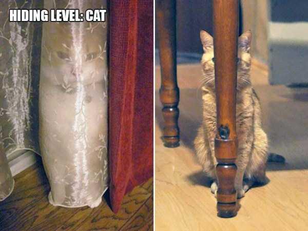 funny-cat-logic (9)