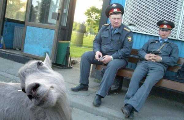 strange-weird-crazy-photos-from-russia (10)