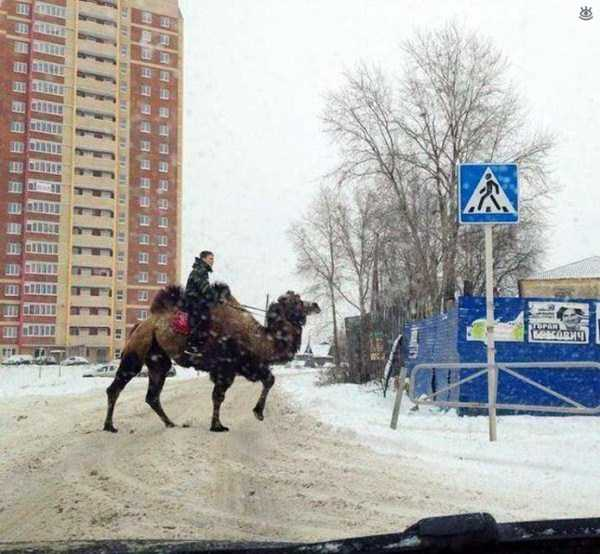weird-pics-from-russia (24)