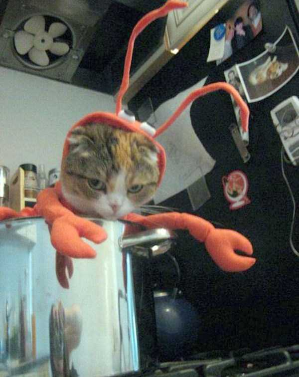 cats-in-funny-halloween-costumes (10)