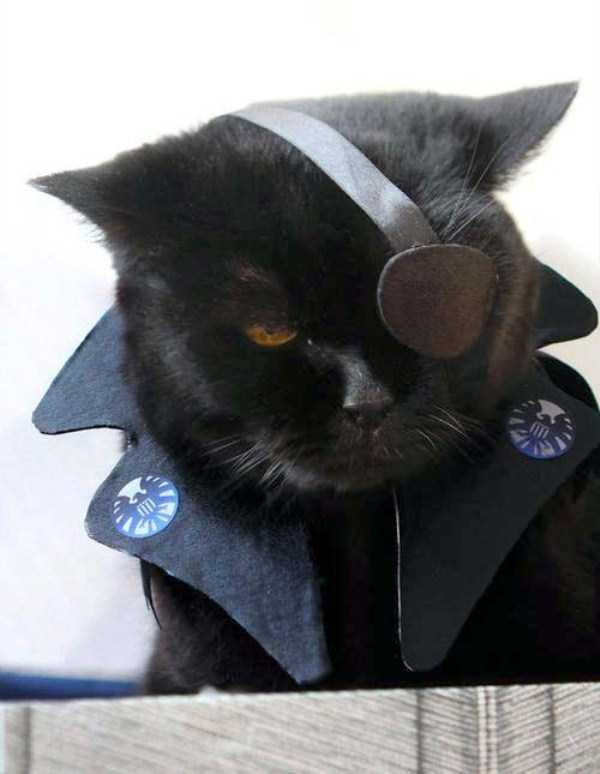 cats-in-funny-halloween-costumes (11)
