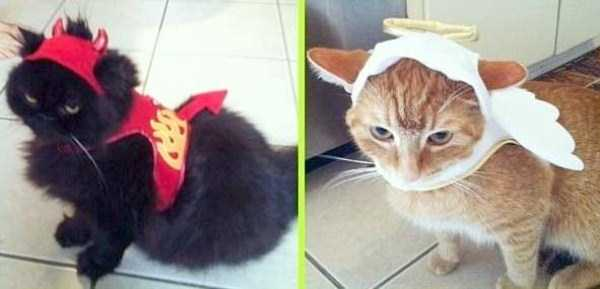 cats-in-funny-halloween-costumes (12)
