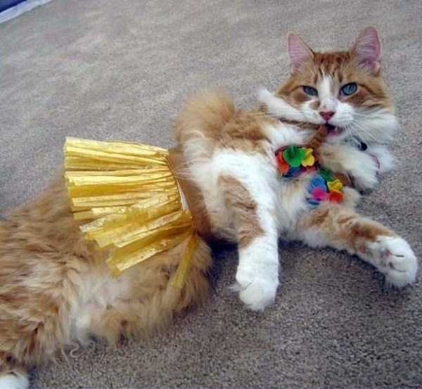 cats-in-funny-halloween-costumes (13)