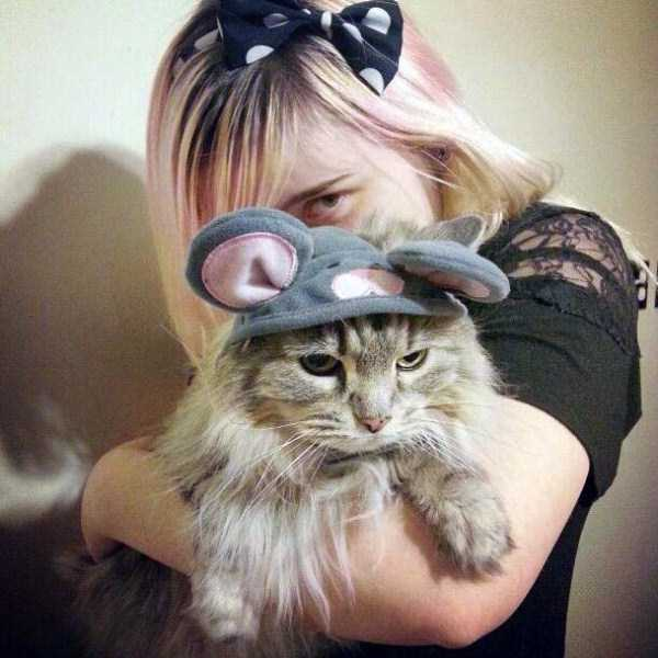 cats-in-funny-halloween-costumes (14)