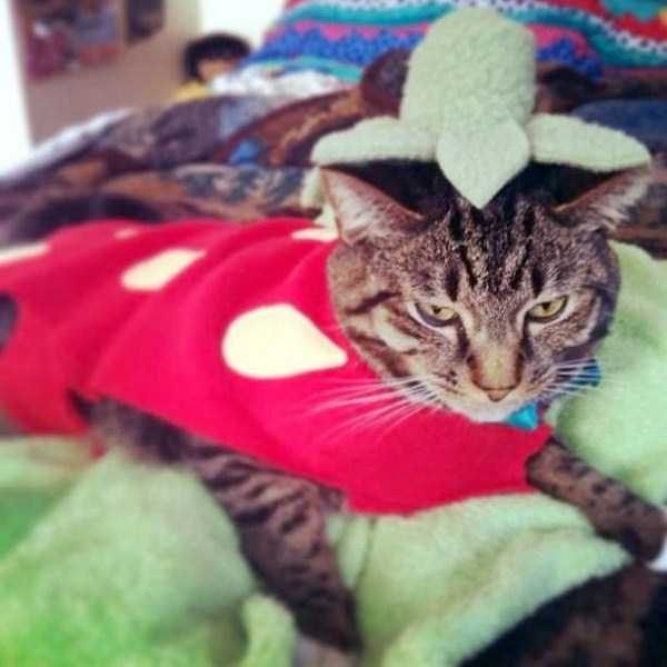 cats-in-funny-halloween-costumes (15)