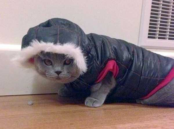 cats-in-funny-halloween-costumes (16)
