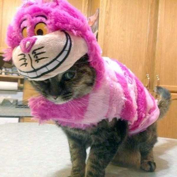 cats-in-funny-halloween-costumes (17)