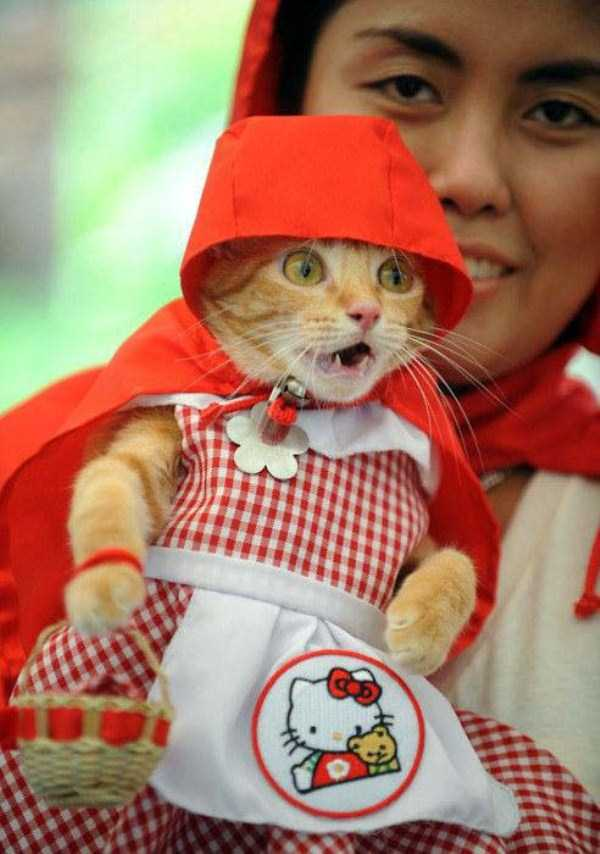cats-in-funny-halloween-costumes (18)