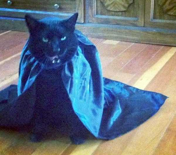 cats-in-funny-halloween-costumes (19)