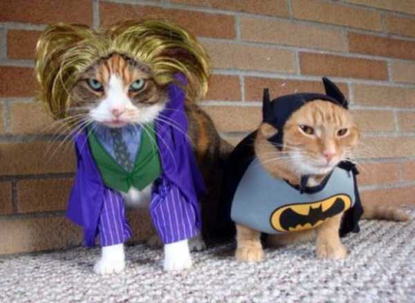 cats-in-funny-halloween-costumes (2)