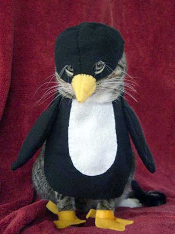 cats-in-funny-halloween-costumes (21)
