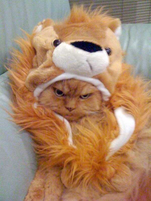 cats-in-funny-halloween-costumes (22)