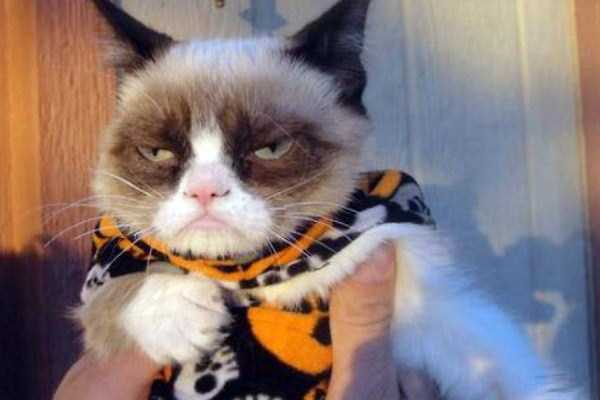 cats-in-funny-halloween-costumes (24)
