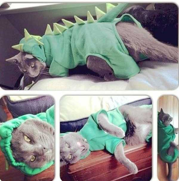cats-in-funny-halloween-costumes (25)