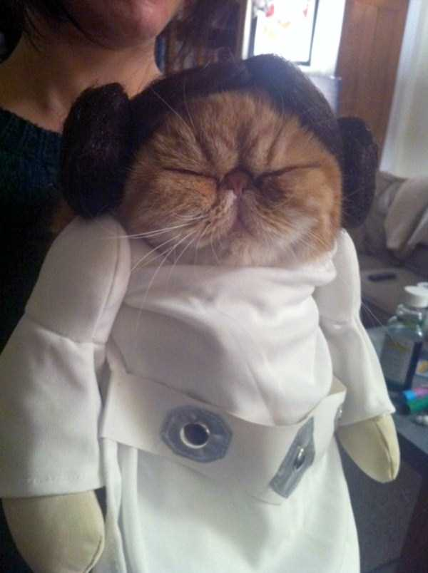 cats-in-funny-halloween-costumes (26)