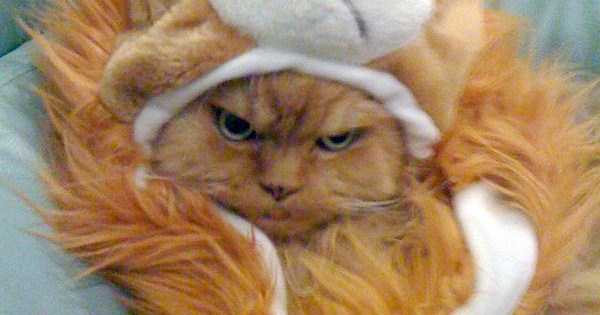 cats-in-funny-halloween-costumes (27)