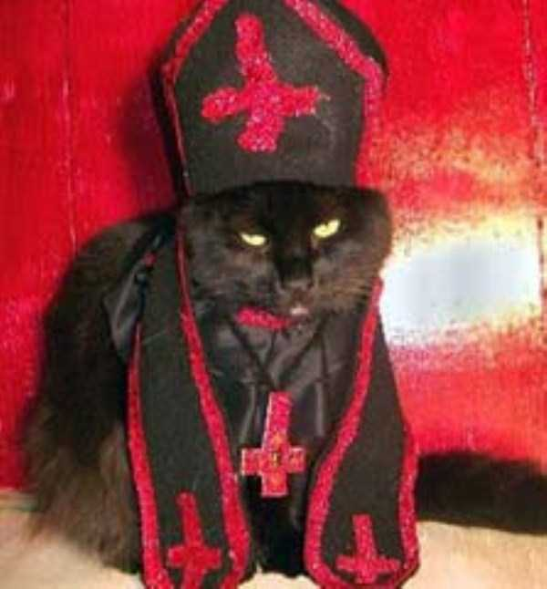 cats-in-funny-halloween-costumes (28)