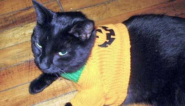 cats-in-funny-halloween-costumes (29)