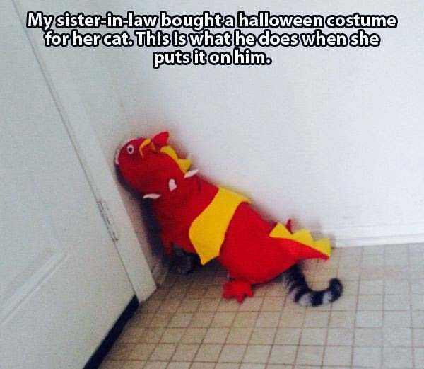 cats-in-funny-halloween-costumes (3)
