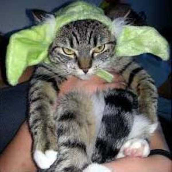 Frustrated Cats Who Clearly Hate Their Halloween Outfits