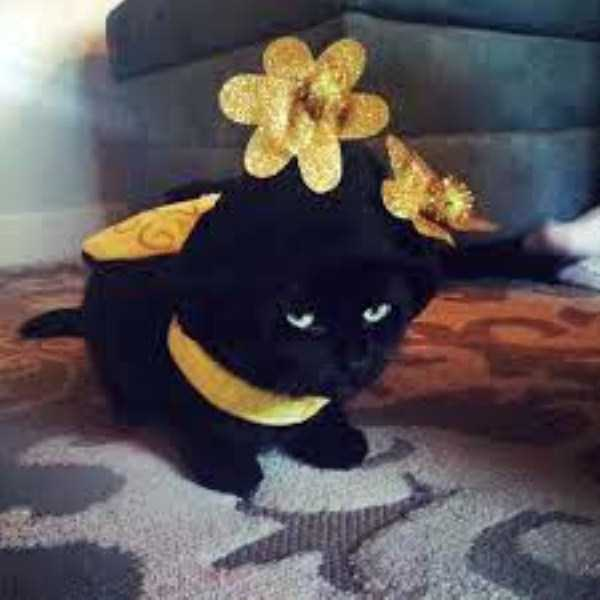 cats-in-funny-halloween-costumes (32)