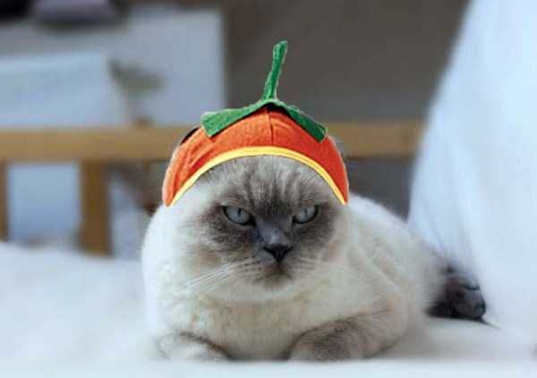 cats-in-funny-halloween-costumes (33)