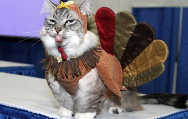 cats-in-funny-halloween-costumes (35)