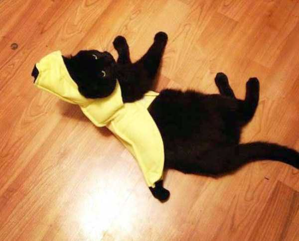 cats-in-funny-halloween-costumes (4)