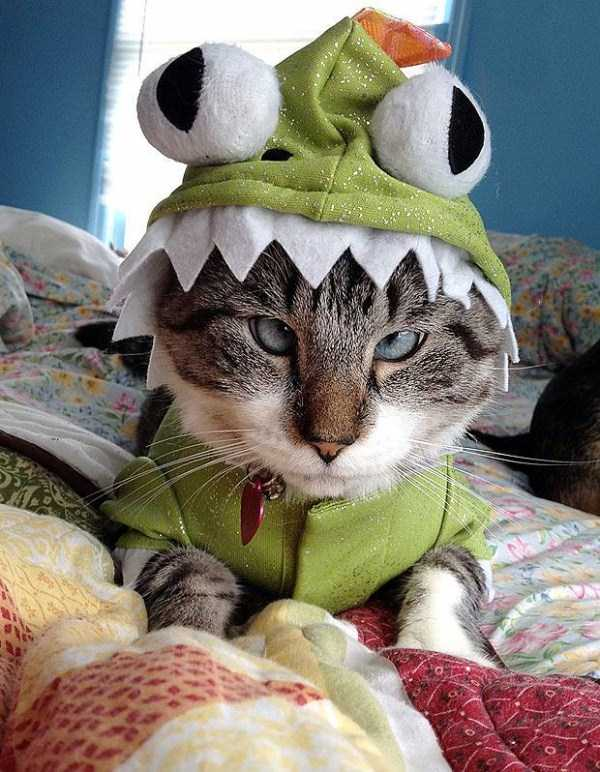 cats-in-funny-halloween-costumes (5)