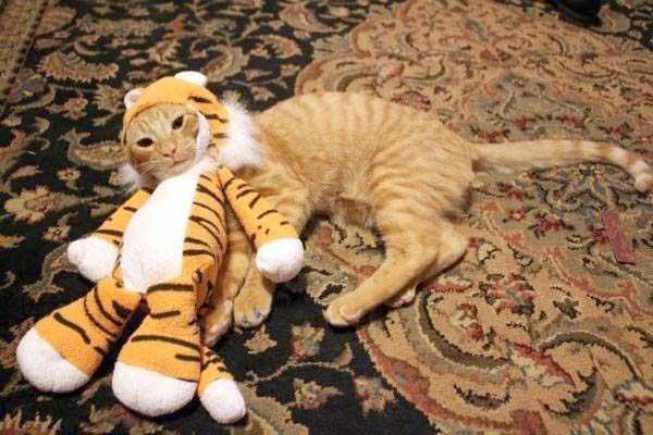 cats-in-funny-halloween-costumes (6)