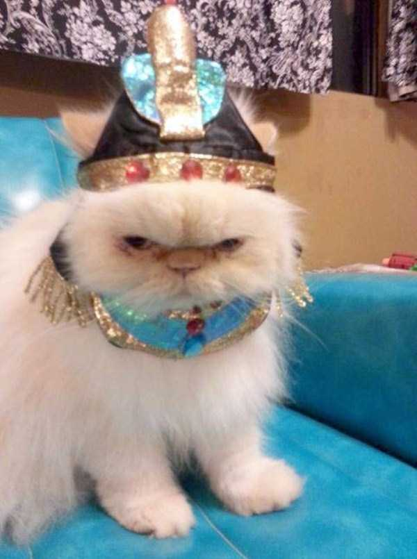 cats-in-funny-halloween-costumes (7)