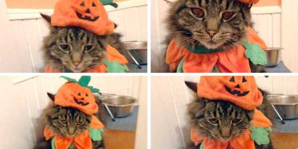 cats-in-funny-halloween-costumes (8)