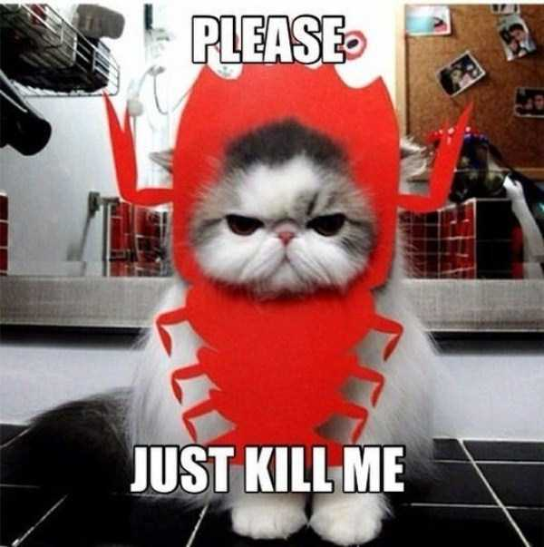 cats-in-funny-halloween-costumes (9)
