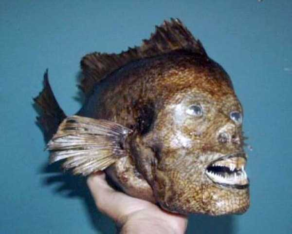 creepy-taxidermy (10)