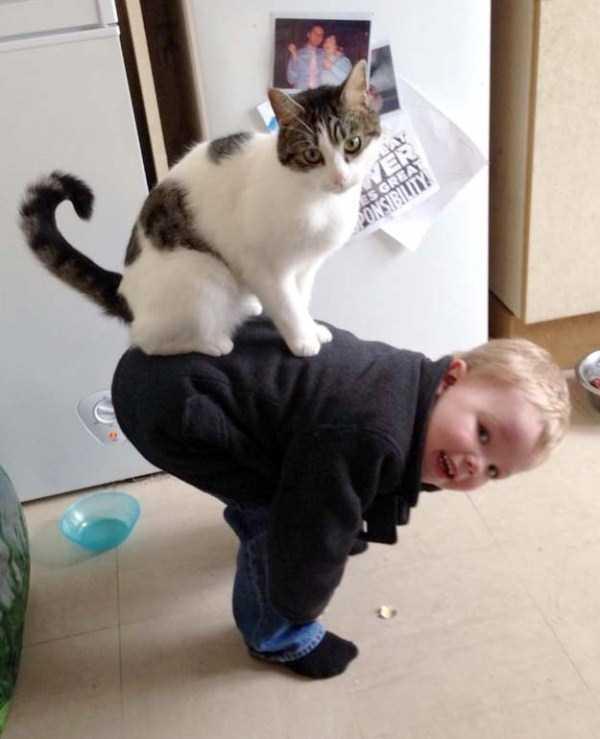 funny-cats-pics (1)