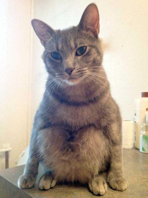 funny-cats-pics (10)