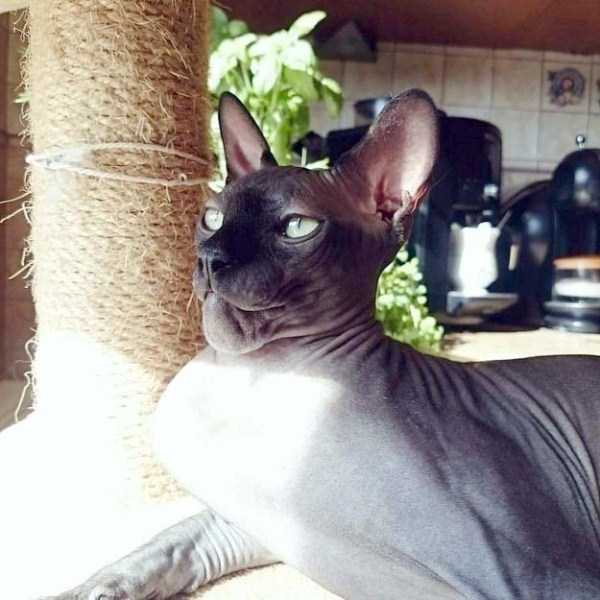 funny-cats-pics (11)