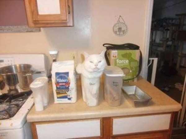 funny-cats-pics (12)