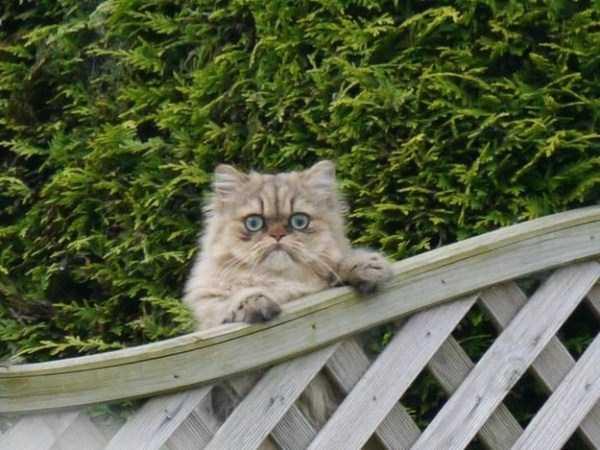 funny-cats-pics (13)