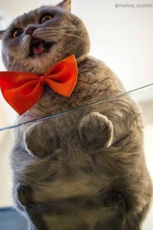 funny-cats-pics (14)