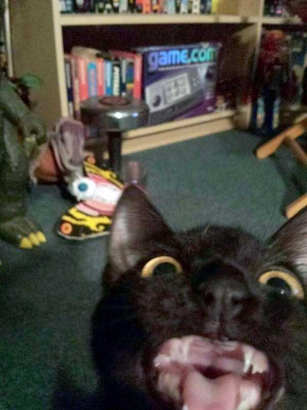 funny-cats-pics (16)