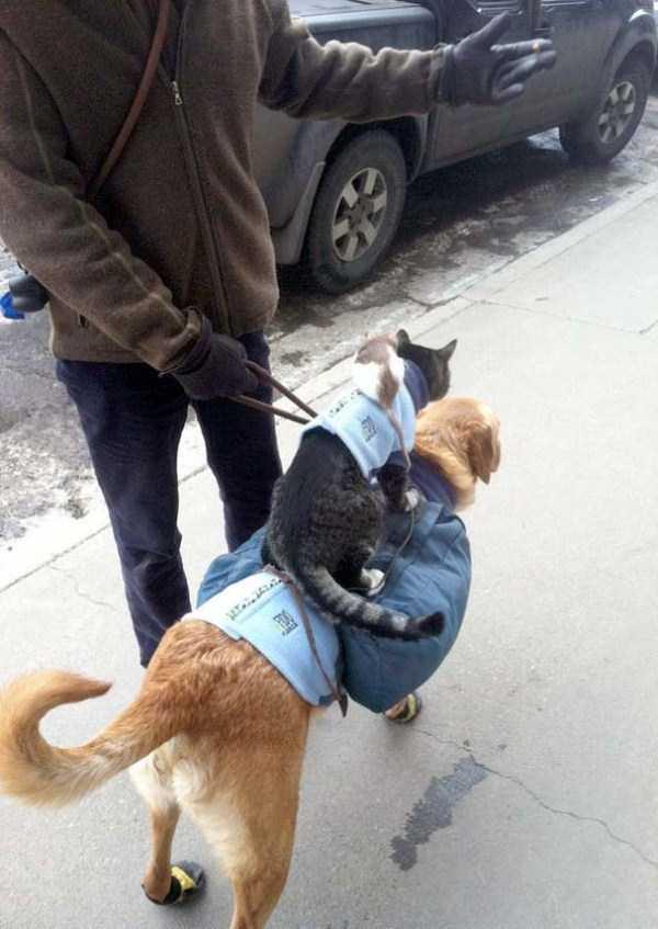 funny-cats-pics (18)