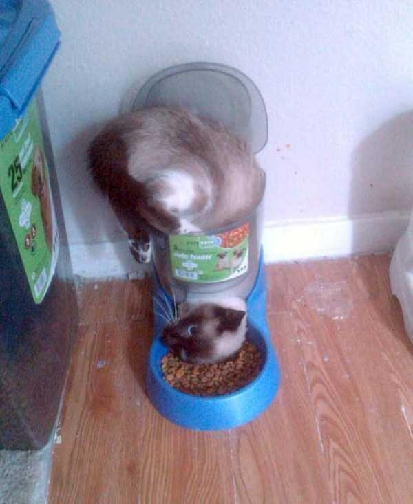 funny-cats-pics (2)