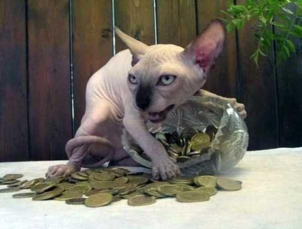 funny-cats-pics (22)