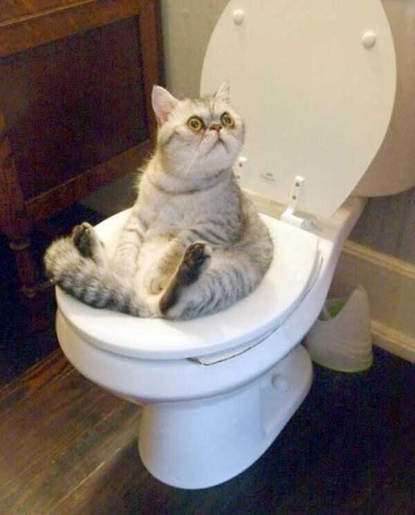 funny-cats-pics (23)
