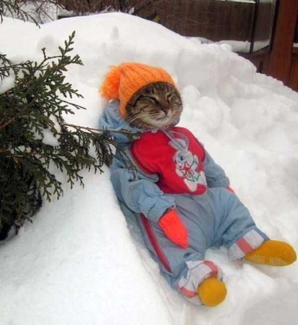 funny-cats-pics (24)